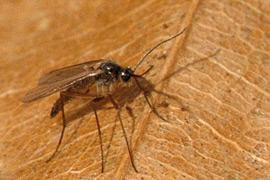 ¿Cómo controlar plagas y enfermedades?