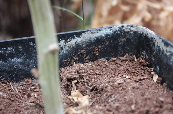 Calidad del agua y su efecto en los cultivos