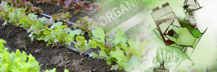 The Organic Certification Paradigm