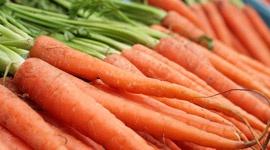 Cultívalo tú mismo: Zanahorias