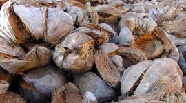 El uso de la fibra de coco como concepto de cultivo