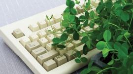 La comunicación en las plantas