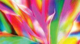 La influencia de los colores en el cannabis