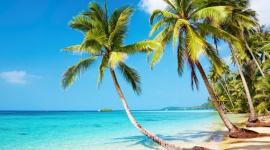 Solución de problemas que puede entrañar el cultivo en sustrato de coco