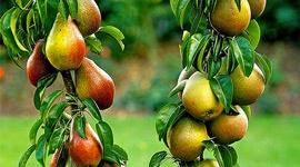Propagación vegetativa: Injerto de púa, de yema y de aproximación